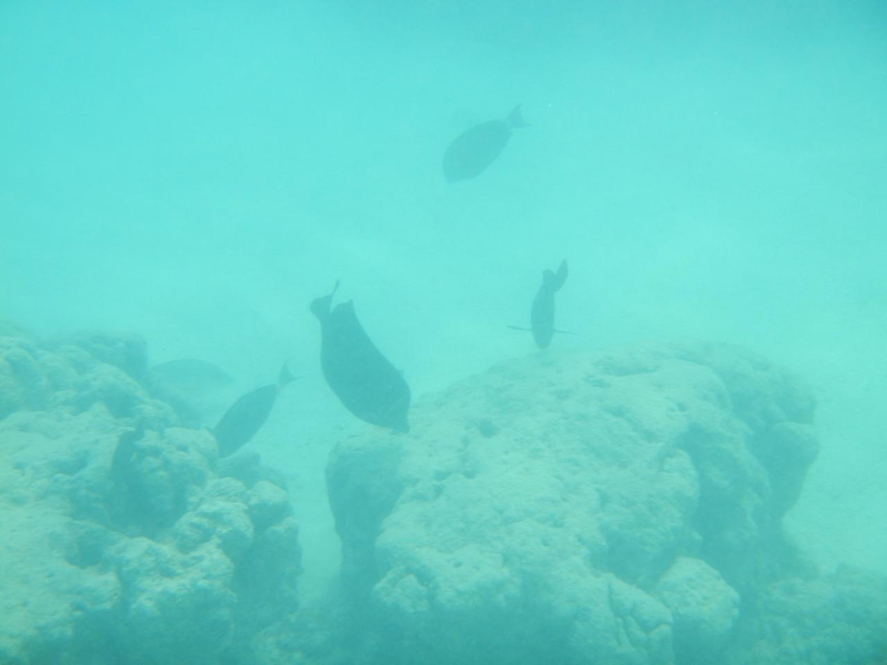 viele Fische aber leider keine Schildkröte
