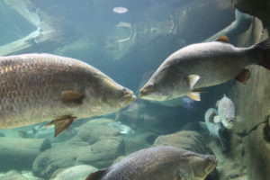 Sealife: auch Fische lieben Küsse!